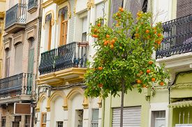 stock photo of valencia-orange  - Charming old houses and ornamental orange trees in Valencia Cabanyal district  - JPG