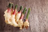 image of root-crops  - ginger root with the greens still attached - JPG