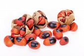 image of natal  - bright red and black seed and burst pods of natal mahogany tree on white - JPG