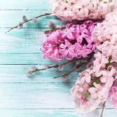foto of willow  - Background with fresh pink hyacinths and willow on turquoise painted wooden planks - JPG