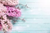 stock photo of willow  - Background with fresh pink hyacinths and willow in ray of light on turquoise painted wooden planks - JPG