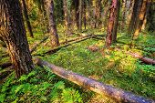 pic of dead plant  -  Dead broken trees in summer forest - JPG