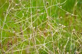 image of dry grass  - Nature background - JPG