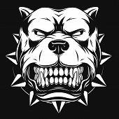 stock photo of pitbull  - Vector illustration Angry pitbull mascot head - JPG