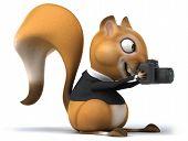 picture of megapixel  - Fun squirrel - JPG