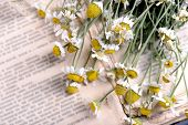pic of roughage  - Old book with dry flowers close up - JPG