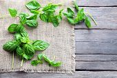 picture of sackcloth  - Green fresh basil with sackcloth on table close up - JPG