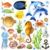stock photo of shell-fishes  - exotic Fish - JPG