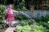 pic of inappropriate  - Granny gardener dressed in a straw hat red dress and pink slippers takes aim with her hose at a solitary flower - JPG