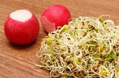 image of alfalfa  - Fresh alfalfa sprouts and radish on wooden surface healthy lifestyle diet food and nutrition - JPG