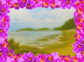 foto of debonair  - Frame of Beautiful Pink Orchids on Soft and blurred background - JPG