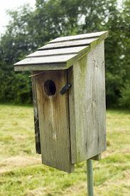 foto of bluebird  - Bluebird house out in the pasture on a warm  summer day - JPG