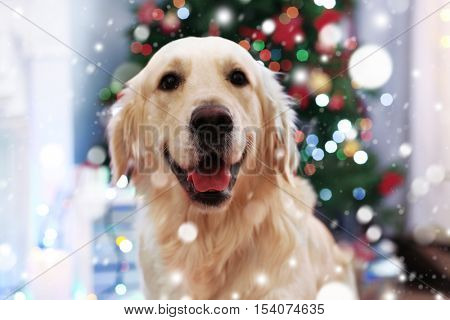 poster of Cute dog on blurred Christmas tree background. Snowy effect, Christmas celebration concept.