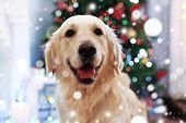 Cute dog on blurred Christmas tree background. Snowy effect, Christmas celebration concept. poster