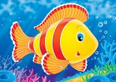 picture of coral reefs  - illustration for children - JPG