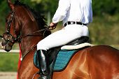 stock photo of horse riding  - man riding horse - JPG