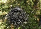 image of bird-nest  - A small bird - JPG