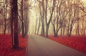 Autumn Landscape. Foggy Autumn Park Alley With Bare Autumn Trees And Dry Red Fallen Autumn Leaves. M poster