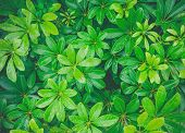 Top View Of Green Leaves With Rain Water On Green Leaves, Close-up Of Fresh Green Leaves With Rain D poster