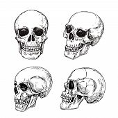 Human Skull. Hand Drawn Skulls. Sketch Vintage Death Tattoo Vector Design Isolated. Skeleton Skull,  poster