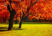 Autumn Trees With Red Foliage In Sunny Autumn September Park Lit By Sunshine. Colorful Autumn Landsc poster
