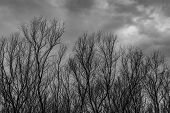 Silhouette Dead Tree  On Dark Dramatic Grey Sky And Clouds Background For  Scary, Death, And Peace C poster