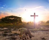 Resurrection Concept: The Lamb Of God In Front Of The Cross Of Christ Jesus poster