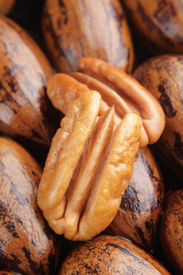 picture of pecan tree  - Pecan halves on a group of whole pecans - JPG