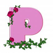 stock photo of climbing roses  - The letter P in the alphabet set Blushing Roses is soft pink - JPG