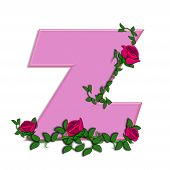 foto of climbing roses  - The letter Z in the alphabet set Blushing Roses is soft pink - JPG