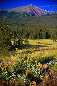 image of colorado high country  - High Alpine wildflowers blooming in the Colorado Rocky Mountains - JPG