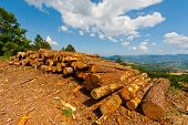 picture of afforestation  - The Sawed Firewood Dropped in a Pile - JPG