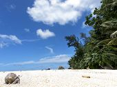 picture of hermit crab  - hermit crab crawling on sandy beach Silhouette island Seychelles - JPG