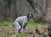 picture of dog poop  - dog pooping outside in the woods or park - JPG