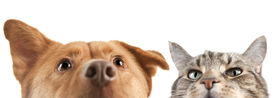 pic of cat dog  - Dog and Cat very up and close on the camera - JPG