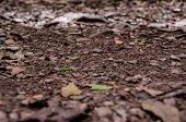 pic of virginity  - Selective focus on the dirt and leaves forming a soft trail in the Virgin Islands National Park