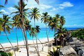 stock photo of caribbean  - Topical Palms at Bottom Bay , Barbados, Caribbean