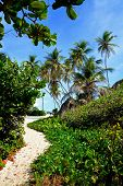 picture of bottom  - Topical Palms at Bottom Bay , Barbados, Caribbean