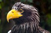 image of eagle  - A closeup of the head of an eagle  - JPG