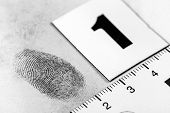 stock photo of criminology  - View of a fingerprint revealed by printing. ** Note: Visible grain at 100%, best at smaller sizes - JPG