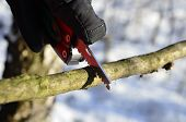 stock photo of survival  - survival knife held in the winter scenery with gloves  - JPG