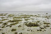 stock photo of tide  - Seaweed on a low tide beach at autumn
