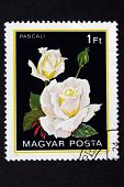 HUNGARY 1982: A postage stamp from Hungary shows rose