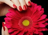 Beauty Salon. Delicate Hands With Manicure Holding Pink Flower poster
