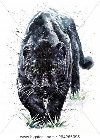 Panther Watercolor Painting Animals Predator