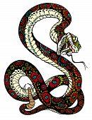 Snake Viper Posion Serpent Animal Wildlife Danger Illustration poster