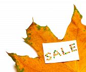 Autumn Dried Maple-leaf And Price Card With Word Sale Composed Of Autumnal Maple Leaves. Isolated On poster