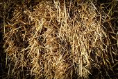 Hay Or Dry Grass Background. Hay Grass Texture Background. Straw, Dry Straw, Straw Background Textur poster