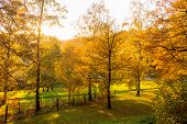 Spring Forest Landscape With Trees In The Spring Forest In Sunny Spring Weather. Sunny Spring Forest poster