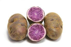 picture of solanum tuberosum  - Blue Potatoes  - JPG